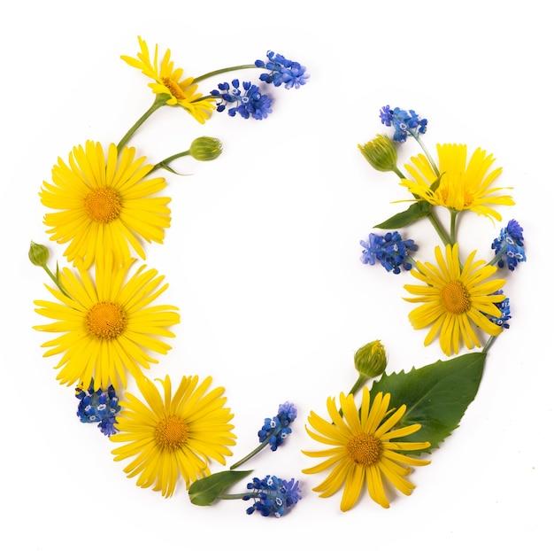 花の構成。黄色と青の花、白い背景の上のユーカリの枝で作られた丸いフレーム。