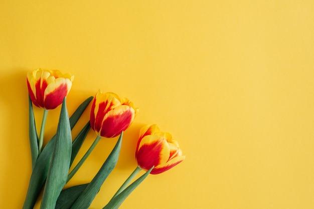 花の構成。春の赤いチューリップの花