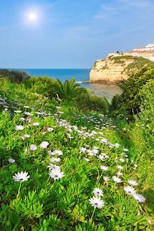 Цветы, ромашки, трава в саду против прекрасного пляжа карвоейру в португалии.