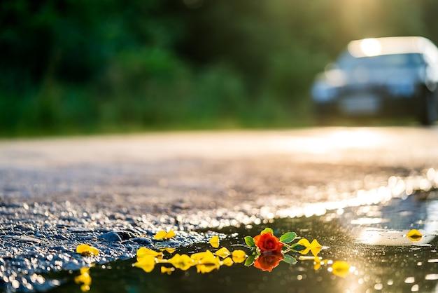 물에 빠진 꽃. 웅덩이에 무작위로 던져진 노란 꽃과 한 개의 빨간 장미. 확대.