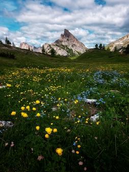 Flowers below the falzare