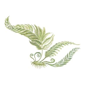 꽃 양치류 숲 식물 잎 수채화 그림 손으로 그린