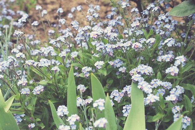 꽃과 필드