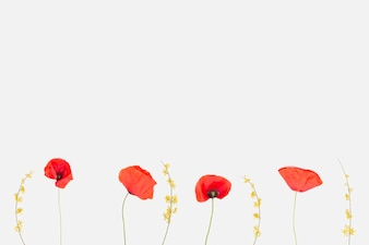 Poppy vectors photos and psd files free download flowers flat lay mightylinksfo