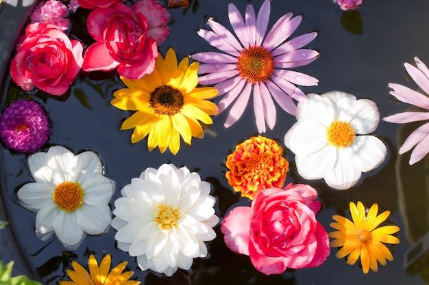 연못에 떠있는 꽃