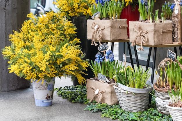 フラワーマーケットで販売されている花。庭のための球根状の多年生の花。ミモザの枝