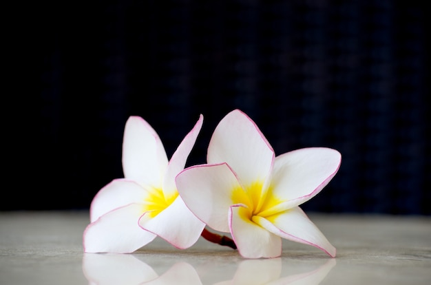Flowers frangipani