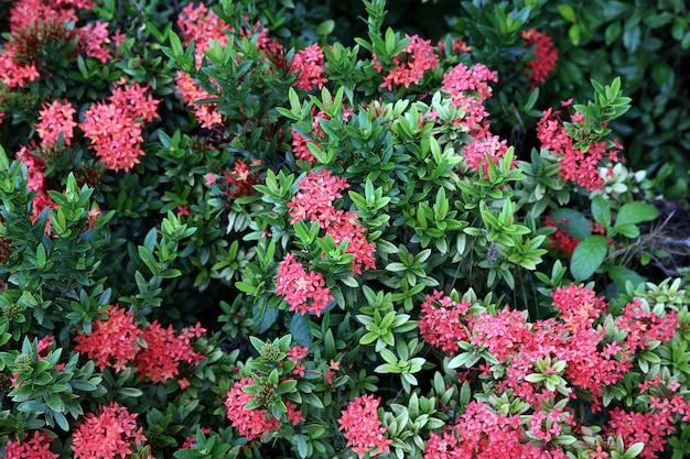 Fiori in un giardino