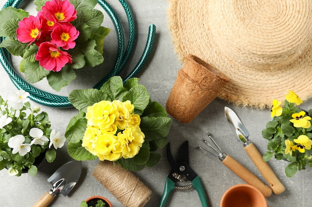 Flowers, gardening tools and accessories on grey background, top view