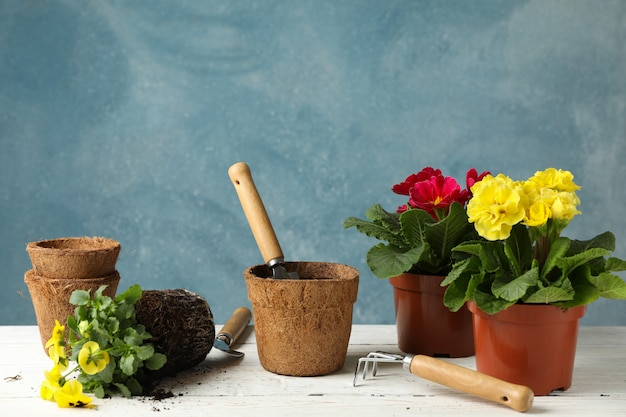 Flowers and gardening tools against blue background, space for text