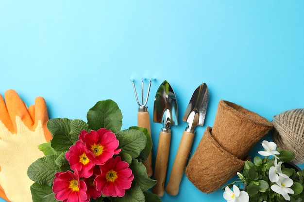 Flowers and gardening tools on blue background, space for text