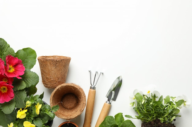 Flowers and gardening tools on white background, top view