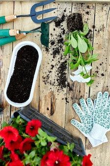 Flowers and gardening tools on wooden background. petunia in a basket and garden equipments. spring garden works concept.
