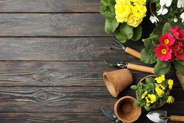 Flowers and gardening tools on wooden background, top view