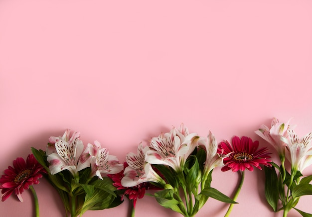 Flowers of gerbera and alstroemeria laid out in a row on a pink background.