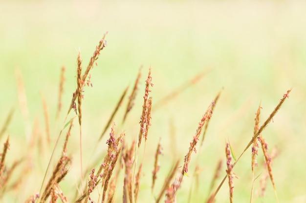 朝の暖かい光の草花
