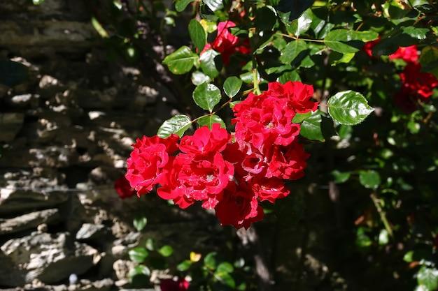 ニュージーランドのアロータウンヴィンテージ村の花