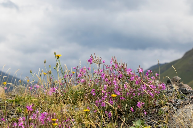 Цветы в поле, красочные цветочные головки, дневной свет и на открытом воздухе