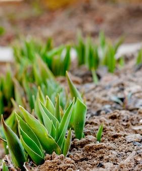Цветы в саду и кустах тюльпанов