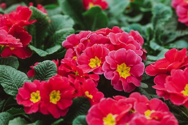 Цветы в теплице