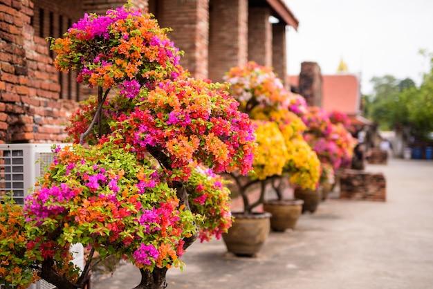 プラナコンシアユタヤ寺院の花サイアム王国の旧首都