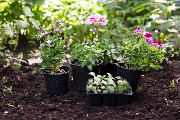 뒷마당에 심기 전에 냄비에 꽃.