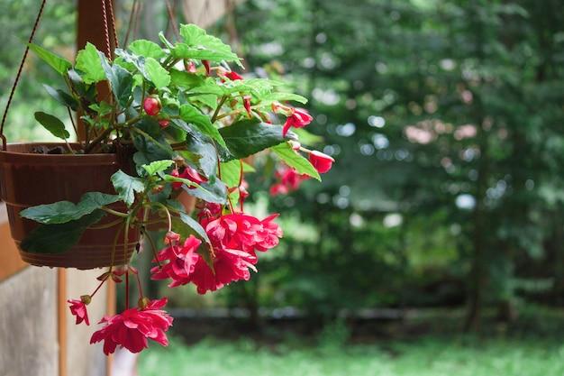 Цветы в горшке в саду в ресторане. скопируйте пространство.