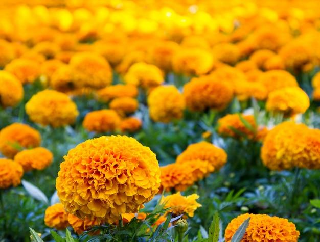 市の花壇の花