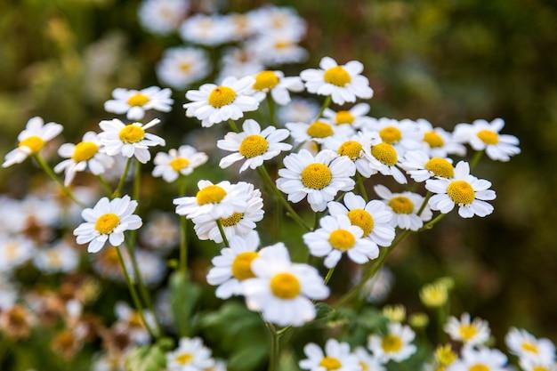 Цветы в саду Бесплатные Фотографии