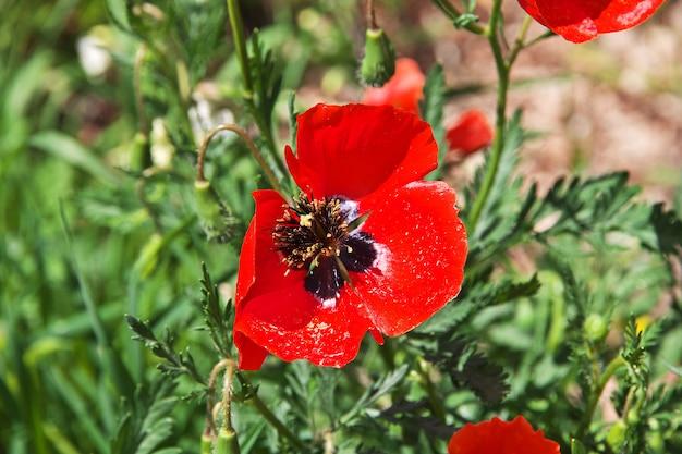 Цветы в монастыре нораванк в горах кавказа, армения