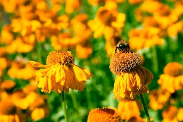 自然の中の花