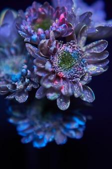 페인트 방울의 꽃은 자외선에 빛납니다.