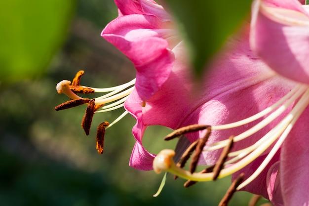 봄철 꽃, 조경용 꽃 재배
