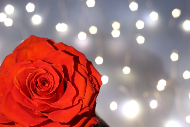 결혼식 연회장에 꽃 배경 및 카드.