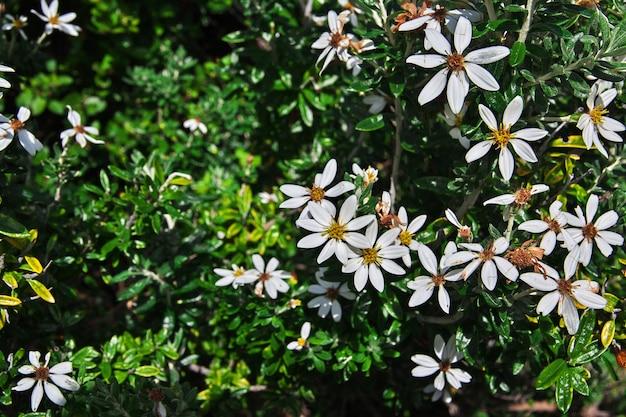 칠레 파타고니아의 토레스 델 페인 국립 공원의 꽃