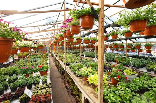 정원 센터 온실 내부의 꽃, 광각 사진.