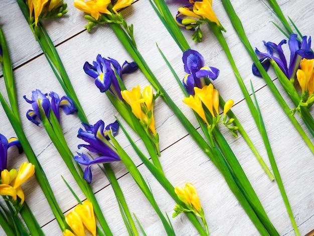 Flowers irises, crocuses light wooden background