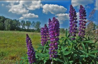 Flowers, landscape