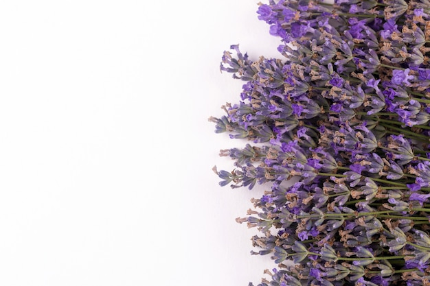 Flowers of lavender on a white background
