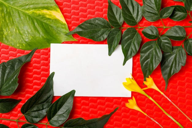Flowers and leaves on red background with copy space