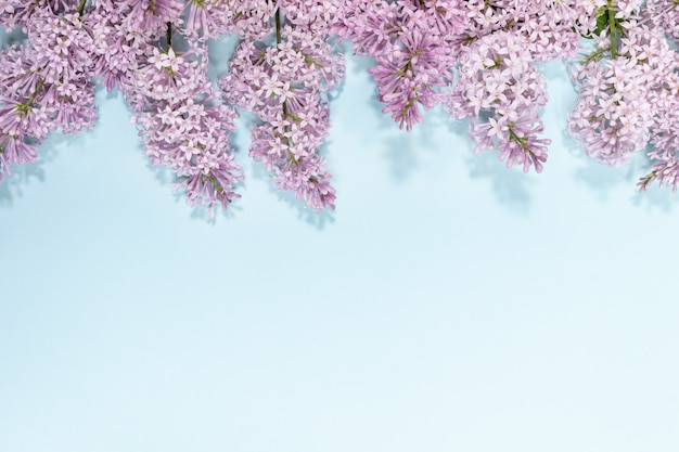 Flowers of lilac on top of light blue background with copy space.