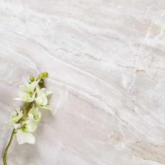 Flowers on marble surface