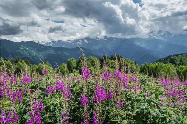 산에서 꽃 초원