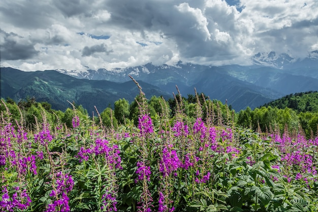 Flowers meadow in mountains