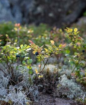 Flowers, moss and mushroom on a mountain rock