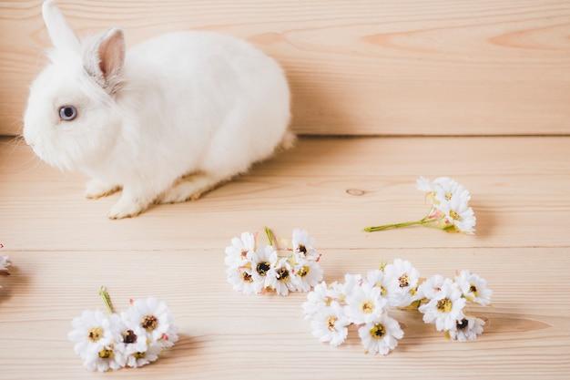 Flowers near white rabbit