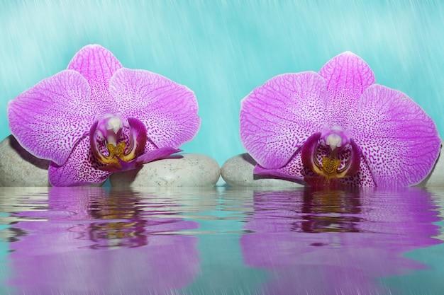 白い小石の霧の中の水の近くのピンクの蘭の花