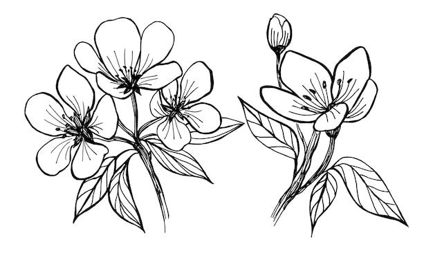 リンゴの木の花。春に咲く木の白黒の描画。リニアアート。