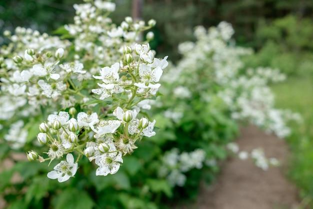庭のブラックベリーブッシュの花