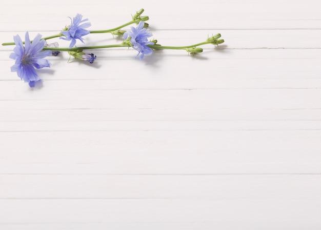 白い木製の背景にチコリの花